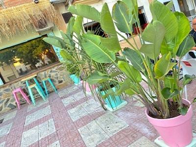 terraza flamenca copas