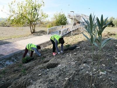 intervención talud con vegetación 4