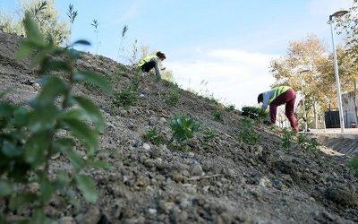 Control de la erosión del suelo mediante la vegetación